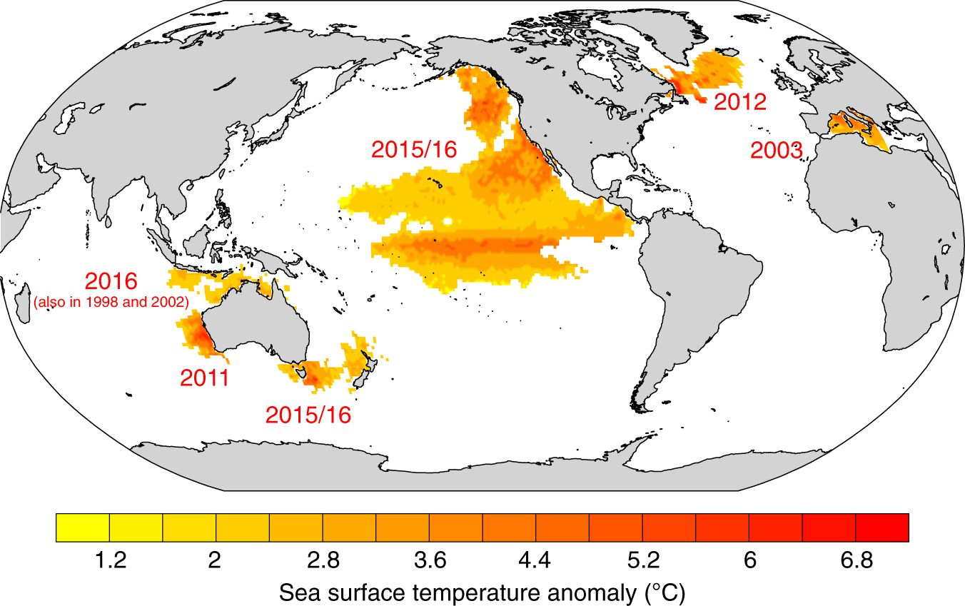 ocean temperature map