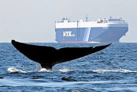 A Whale Mostly Submerged In The Water With Only It Tail In The Air With A Large Boat In The Back
